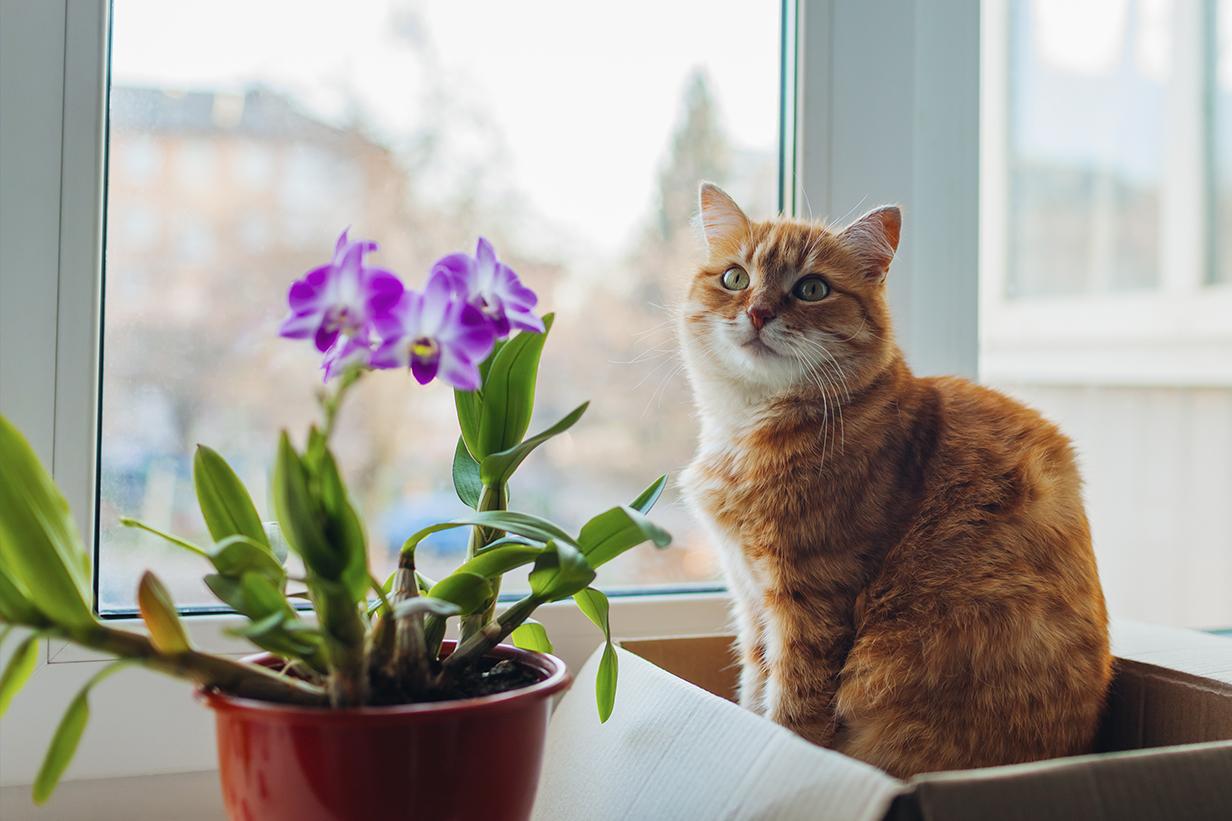 Los Gatos y Plantas, aprovechan la energía solar al máximo.