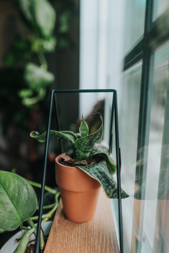 Mantener fresquito tu piso en Madrid con plantas